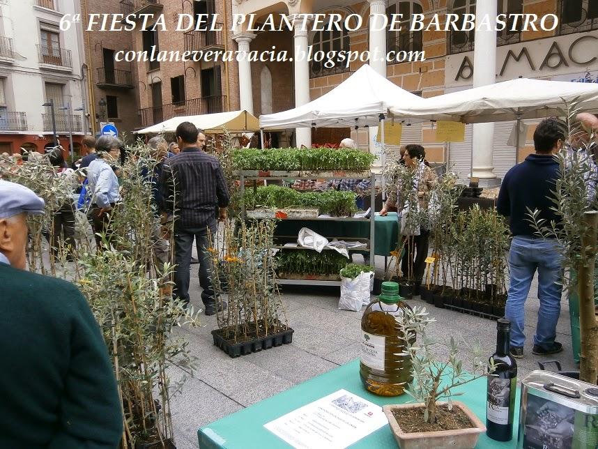 FIESTA DEL PLANTERO DEL TOMATE ROSA DE BARBASTRO